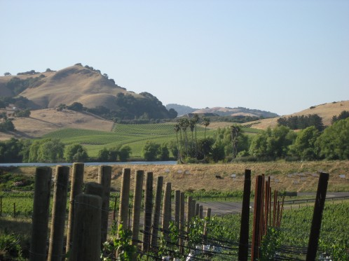 Looking out over Carneros, Napa Valley